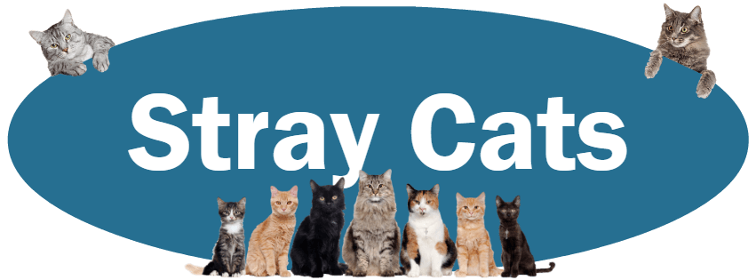 CLICK HERE To Learn What You Should Do If You See Stray Cats.