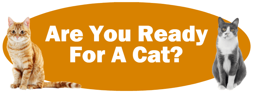 CLICK HERE For Information About Deciding If You Are Ready For A Cat