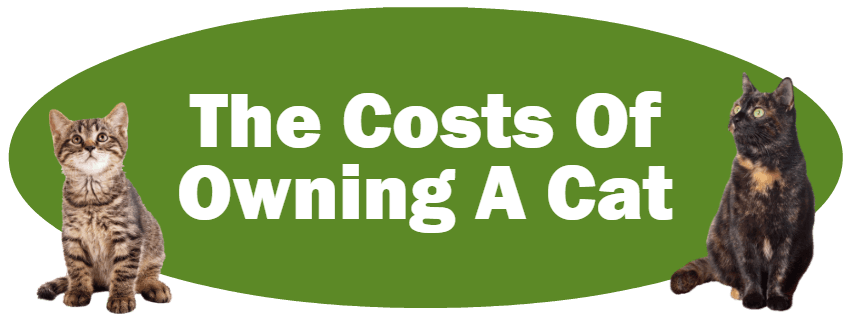 CLICK HERE For Information About The Costs Of Owning A Cat