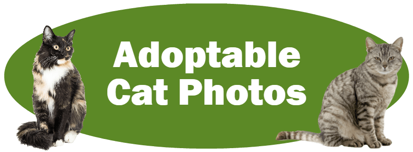 CLICK HERE For Photos And Information About Adoptable Cats