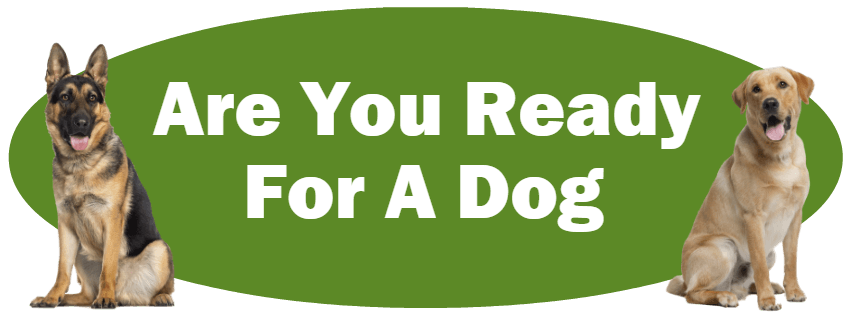 CLICK HERE For Information About Deciding If You Are Ready For A Dog
