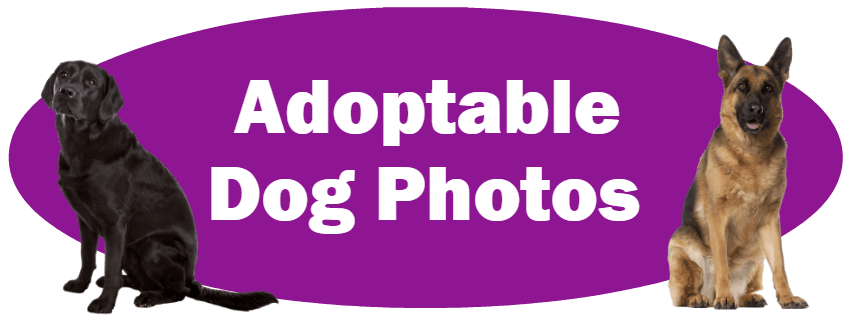 CLICK HERE For Photos And Information About Adoptable Dogs