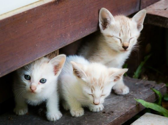 Three kittens under a porch.