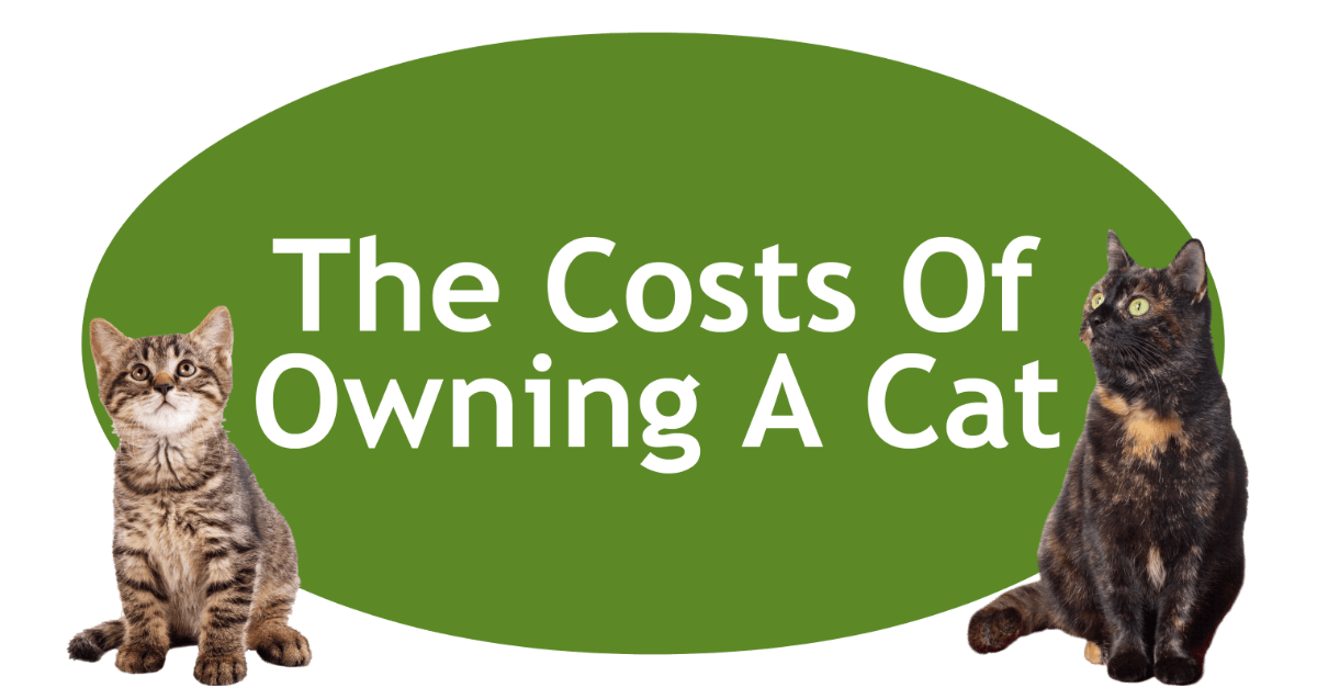The Costs Of Owning A Cat Page Banner