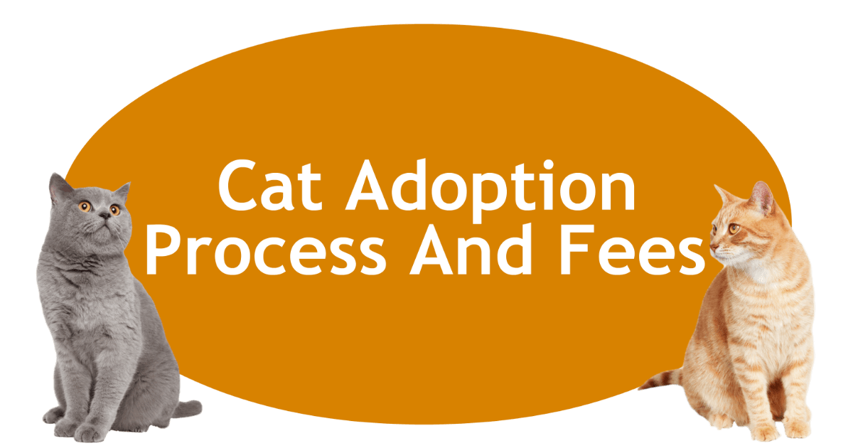 Cat Adoption Process And Fees Page Banner