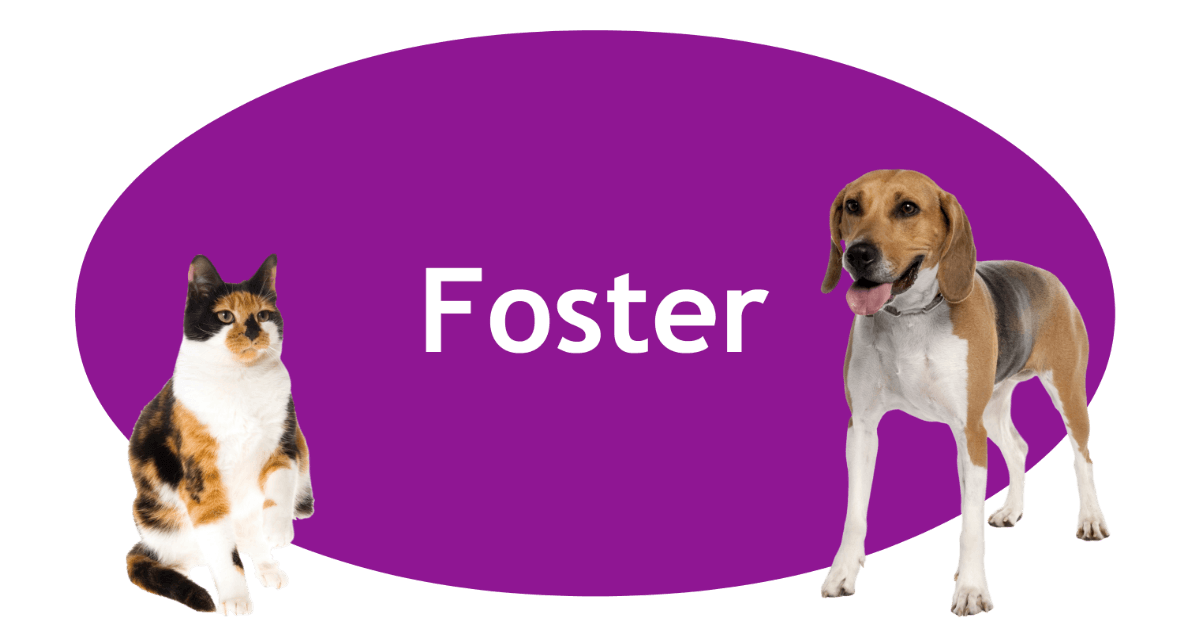 Foster Page Banner