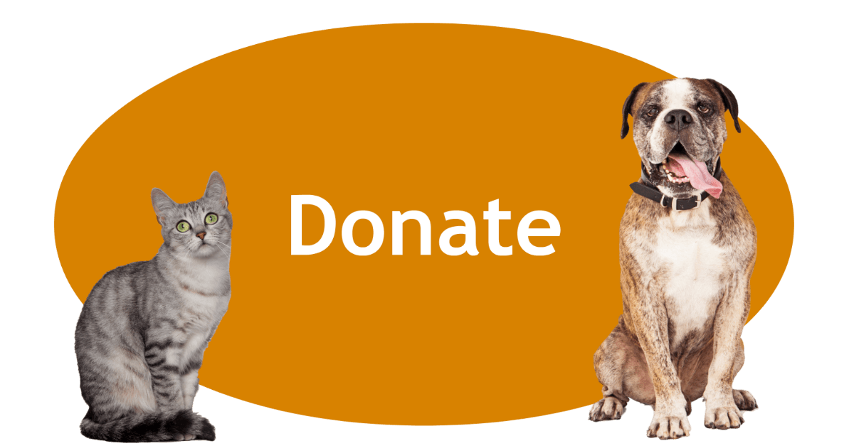 Donate Page Banner