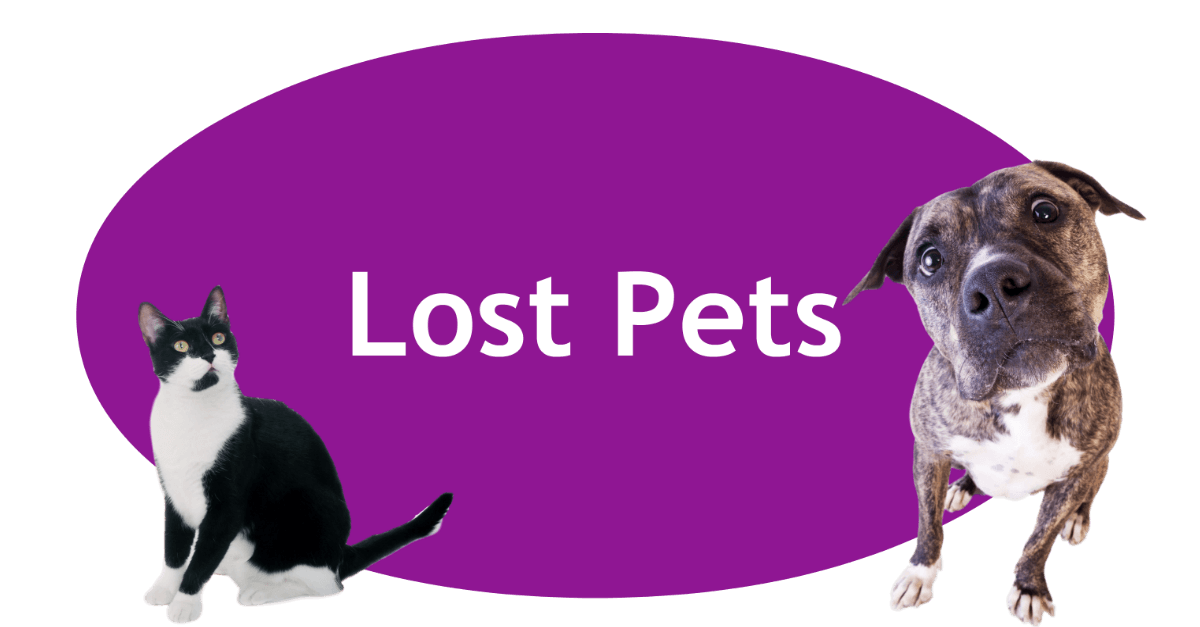 Lost Pets Page Banner