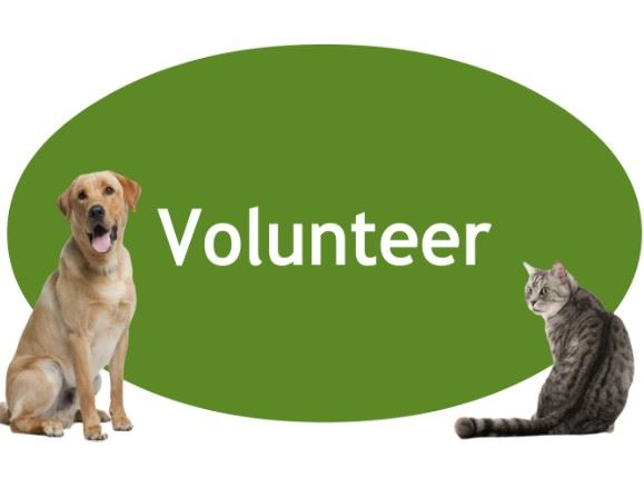 CLICK HERE to learn more about becoming a volunteer!