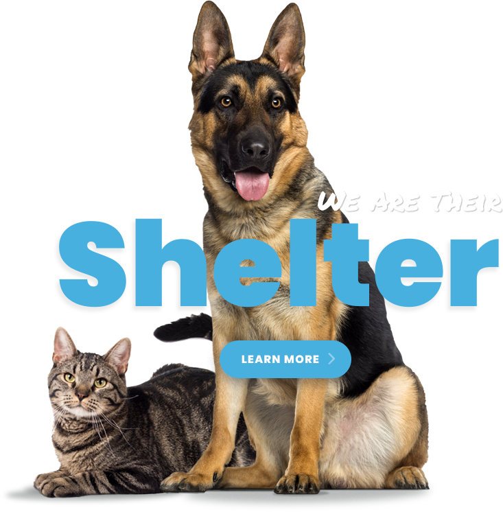 We Are Their Shelter - Learn More