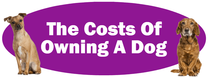 CLICK HERE For Information About The Costs Of Owning A Dog