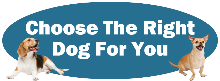 CLICK HERE For Information About Choosing The Right Dog For You