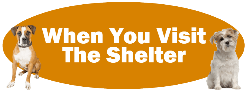 CLICK HERE For Information About When You Visit The Shelter