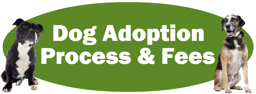 CLICK HERE For Information About The Dog Adoption Process And Fees